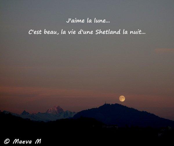 C'est beau la vie d'une Shetland la nuit !
