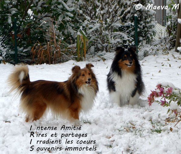 Les patounes dans la neige !