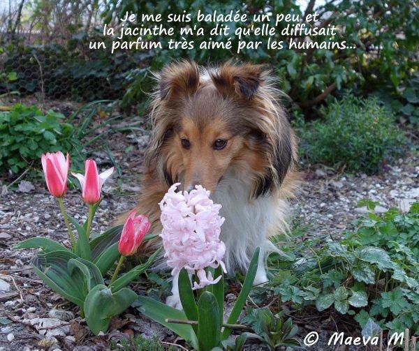Iris et la botanique rigolote du printemps !