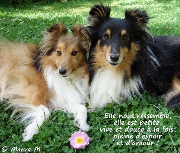Iris & Maroane sont heureuses de...