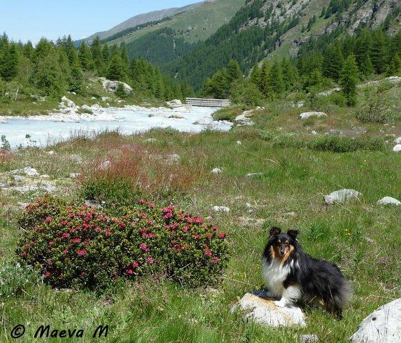 Iris et la balade de Maroane au glacier