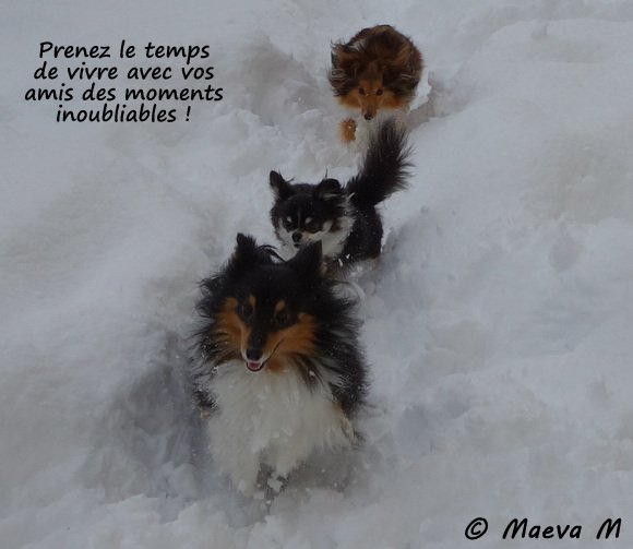 Iris et ses amis dans la neige