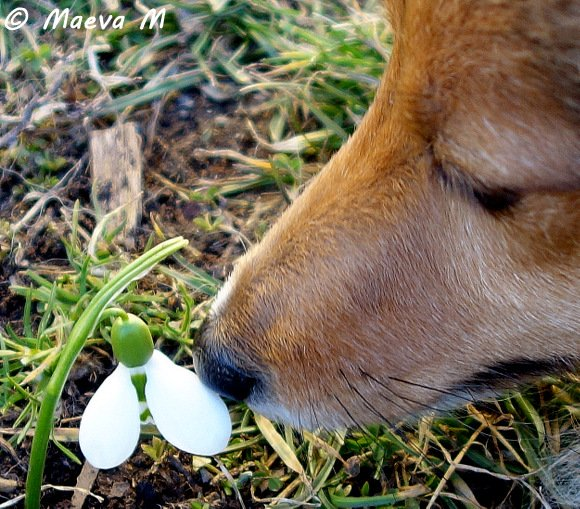 Iris et les prémices du printemps