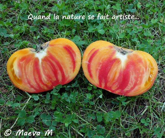 Iris, tite fée de l'automne