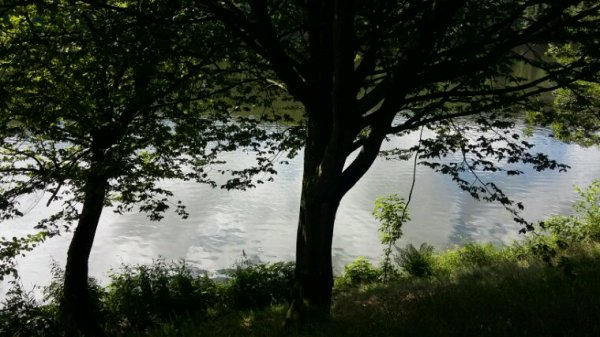 Lac des sapins