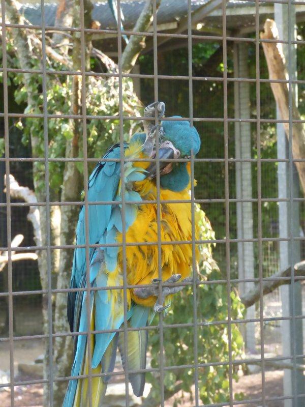Parc des oiseaux, Juin 2017