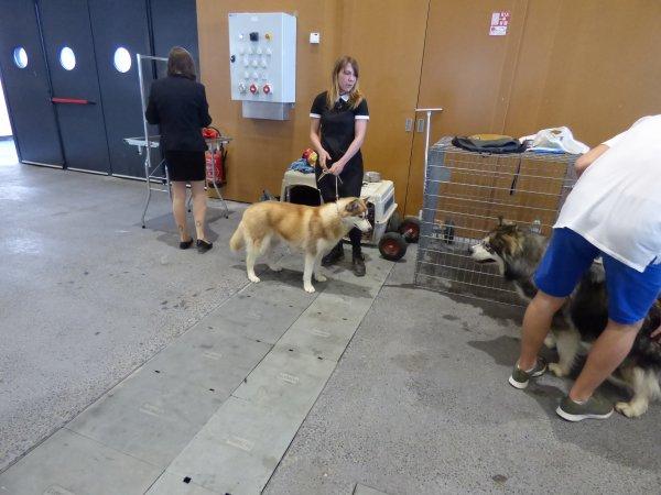 Expo canine 2018 Lyon