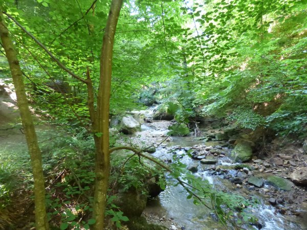 Région Mullerthal : CASCADE SCHIESSENTÜMPEL (juillet 2018)