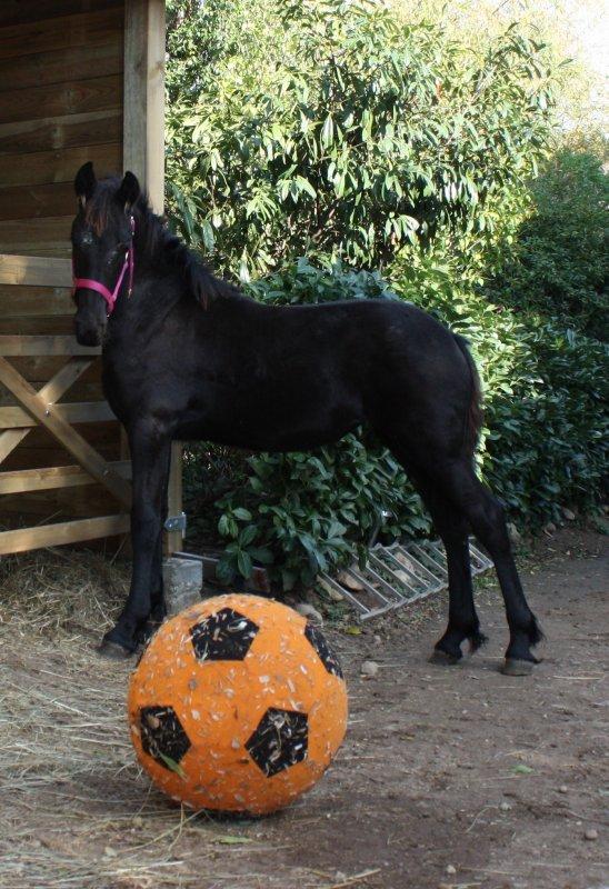 Kaly prend ces repères et elle adore ce Ballon