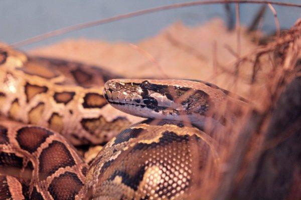 7 Septembre  Exposition Reptiles
