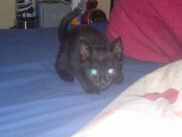 mon nouveau chat