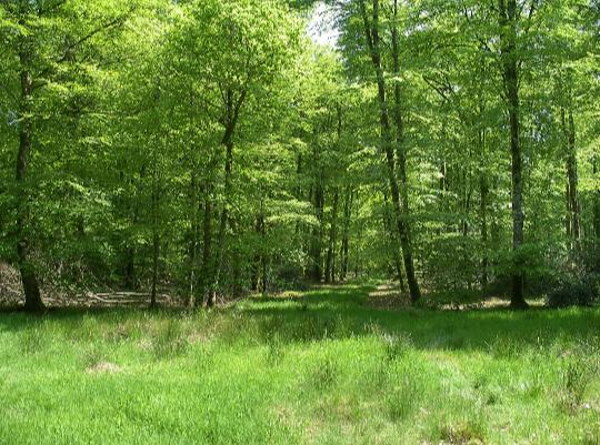 Chapitre 11 : Course en forêt
