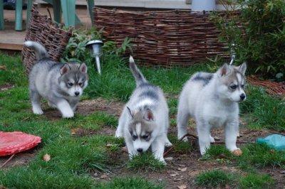 Les petits Cheyenne's Spirit