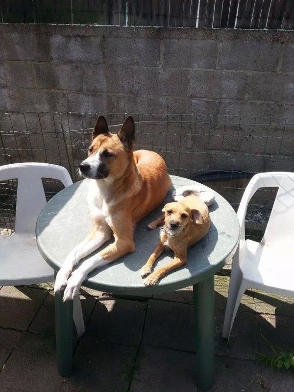 Notre deux chiens dounia et nala
