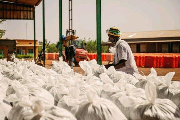 Culture des OGM: l'Afrique se retire peu à peu !!