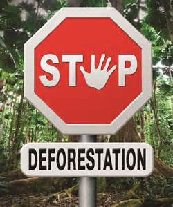 DEFORESTATION : STOP !