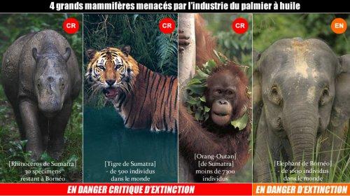 Déforestation - L'HUILE DE PALME