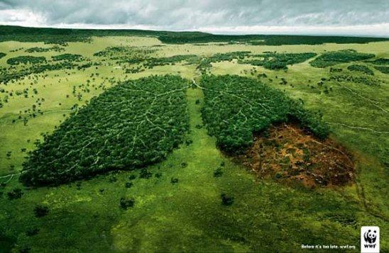 La forêt, foyer de biodiversité et poumon vert de l'humanité