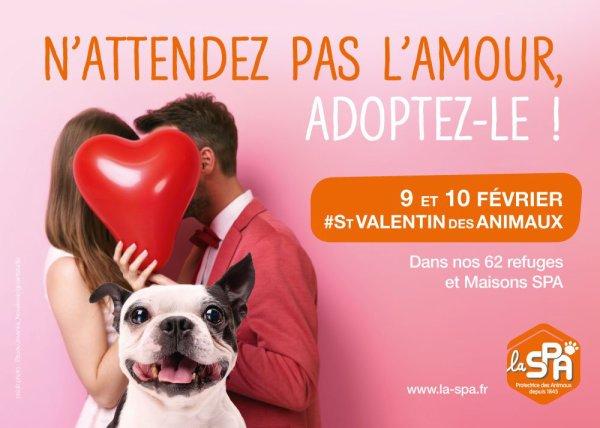 N'attendez pas l'amour, adoptez-le !