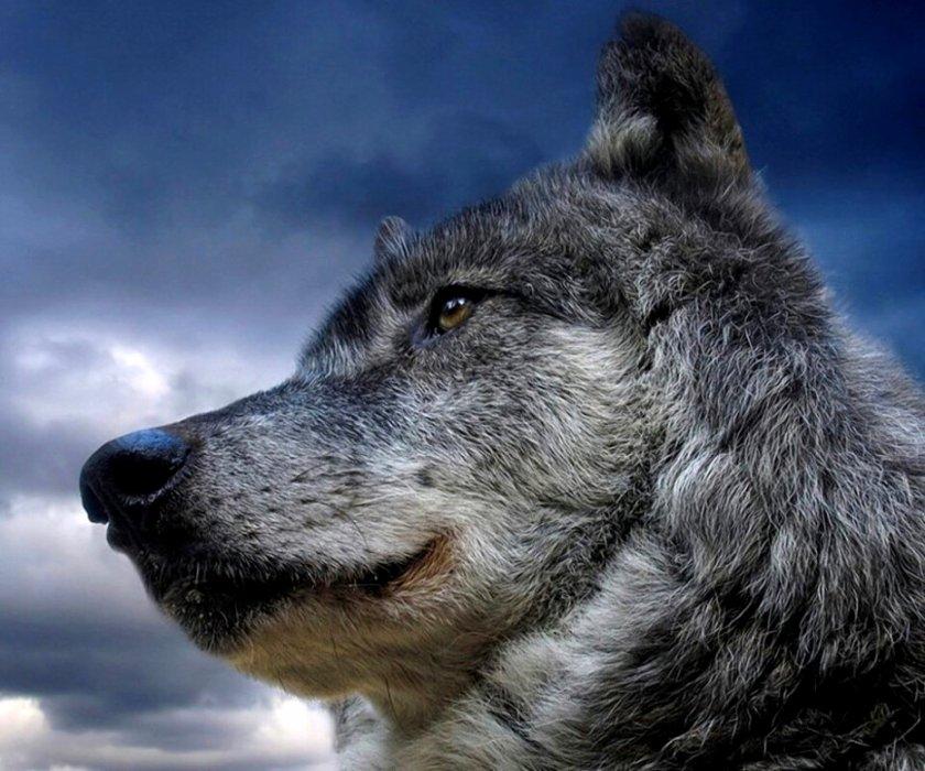 Blog de loups27