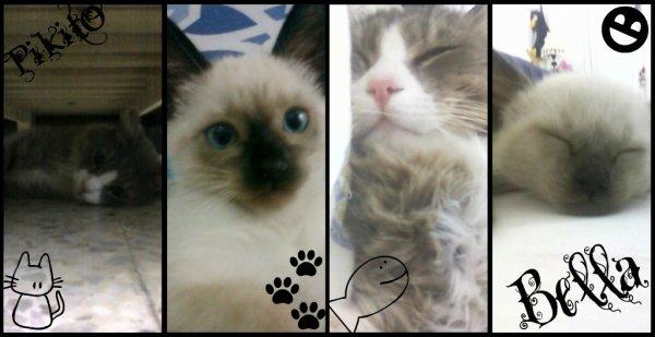 Pikito & Bella