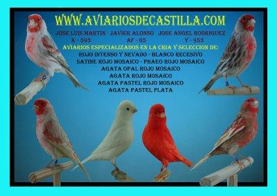 www.aviariosdecastilla.com