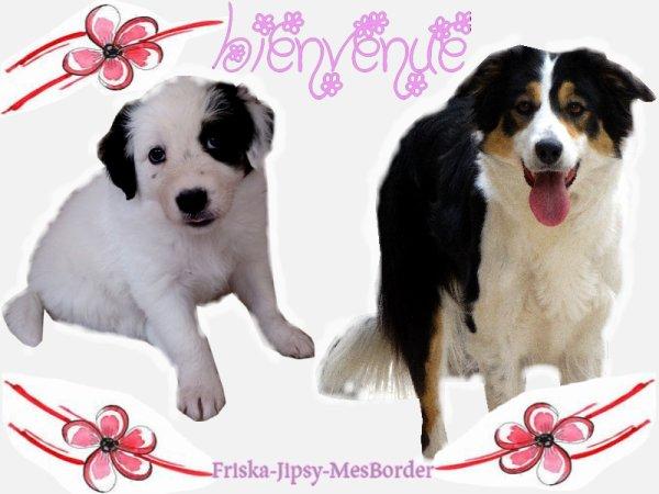 ALLEZ VOIR LE NOUVEAU BLOG www.Friska-Jipsy-MesBorder.skyrock.com ! <3 ET LA PAGE FB !
