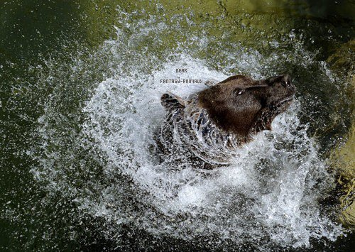 Spectacles de montreur d'ours
