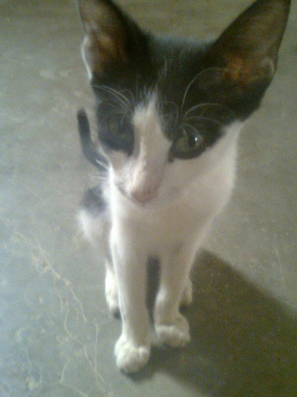 chat de mon cousin