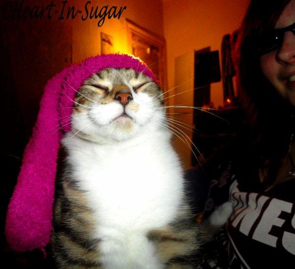 ♪ Femme à chats, vous dites ? ♥