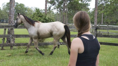 Lhomme qui murmurait à loreille des chevaux s