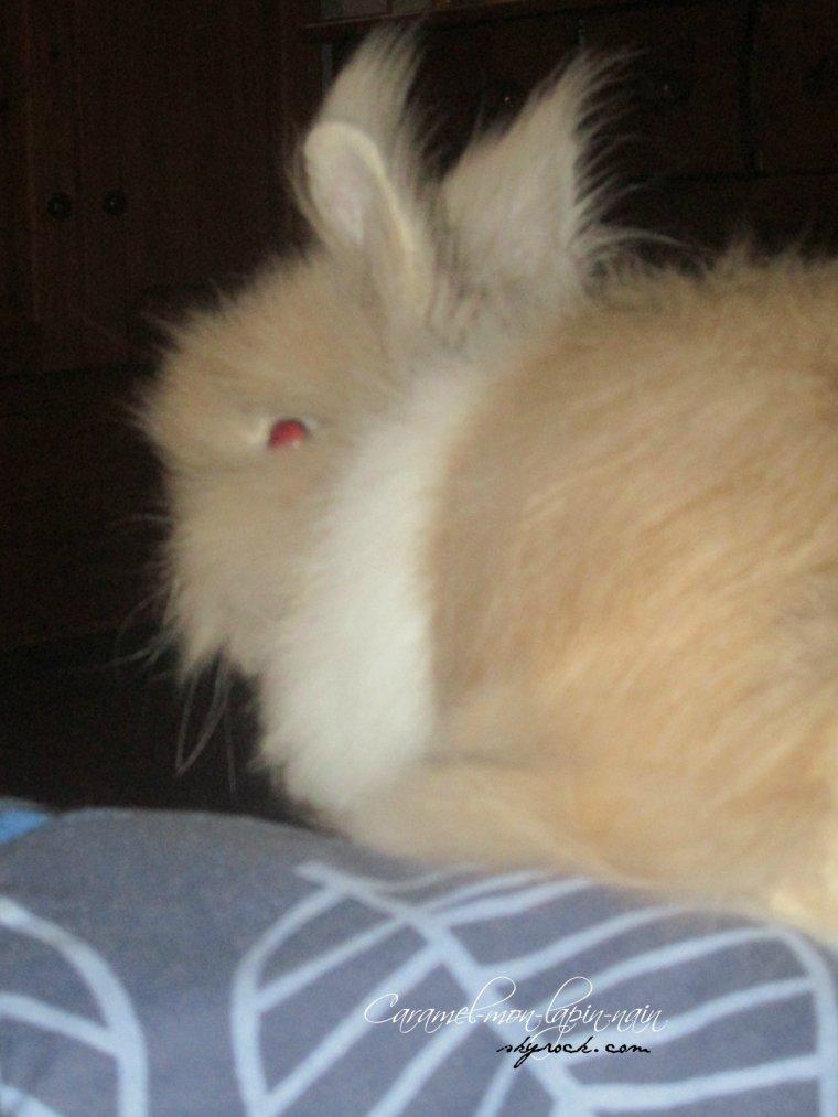 Séance photo de mon lapin ! ♥