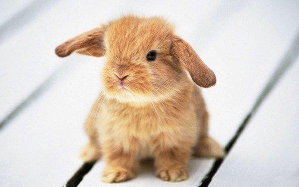 L'habitat du lapin !