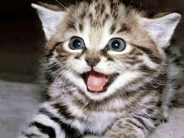 Bonjour pour celles et ceux qui veulent découvrir mon chat adoré c est dans le blog vip bisous