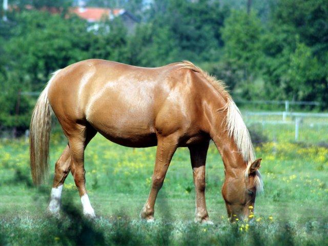 ma vie mes chevaux