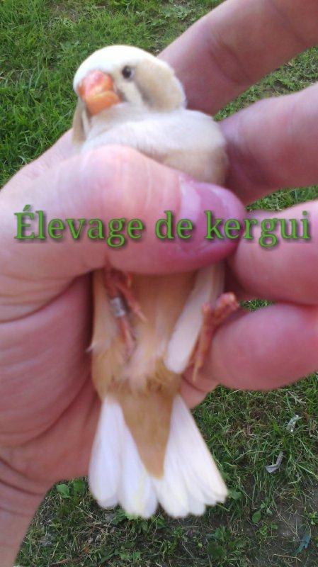 Bourse aux oiseaux place mulac (16)