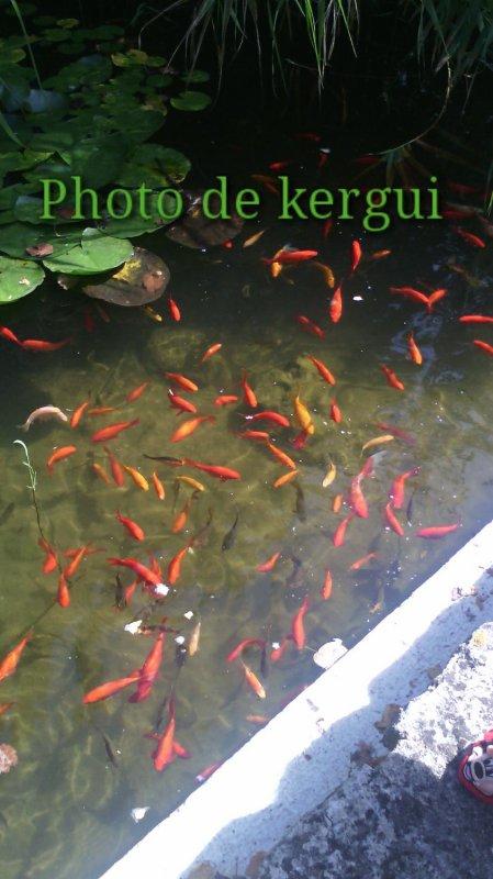 Jardin vert Angoulême