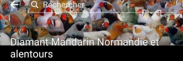 Diamant Mandarin Normandie et alentours