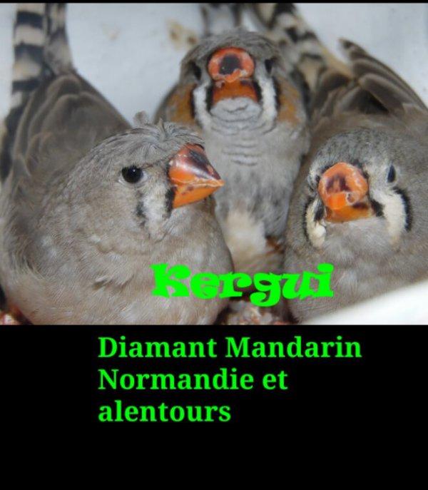 Diamant mandarin huppé