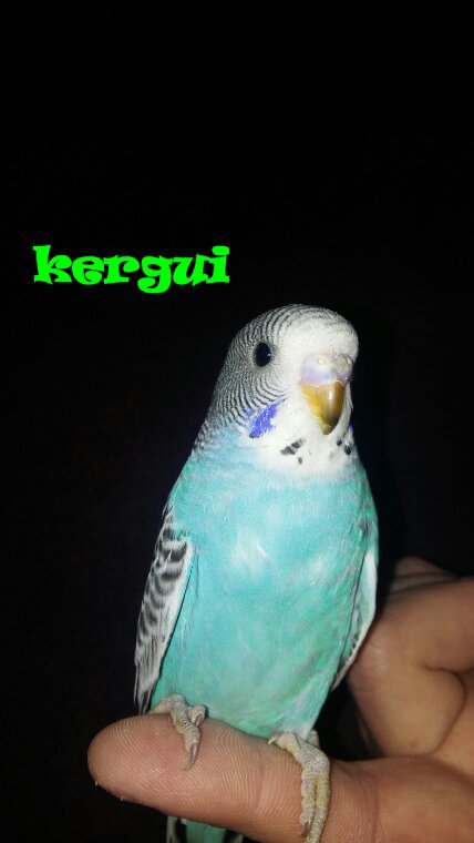 Perruchon