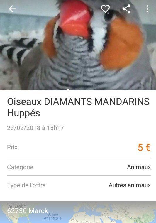 Mandarin huppé arnaque