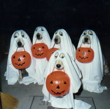 Quelques images sympas d'Halloween.!!!!!!!