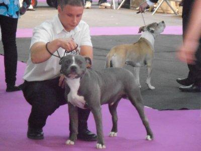 Exposition de Tours 2011 NE FABAS