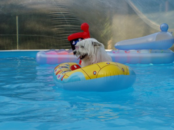 Toby a la piscine