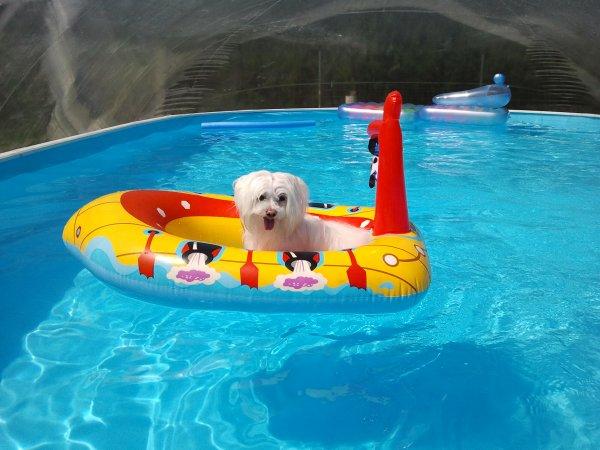 Toby et Thommy piscine