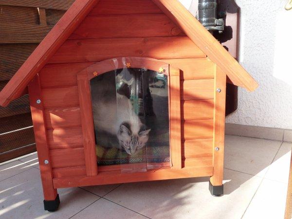 La niche pour les chats