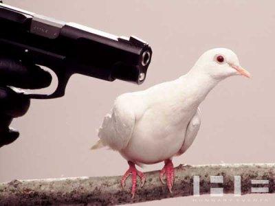 A bas le pigeon! Vive le petit ours!