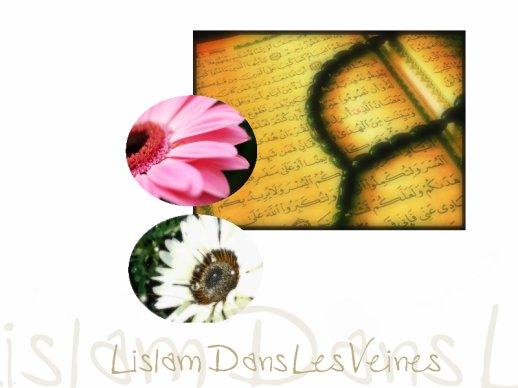 ۞,,,,,,,,,,,,,,,,,,,,,,,,,,,,Le Quran,,,,,,,,,,,,,,,,,,,,,,,,,,,,۞