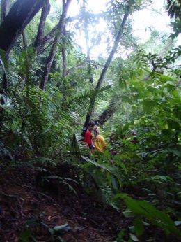 Excursions dans la jungle, semaine 2