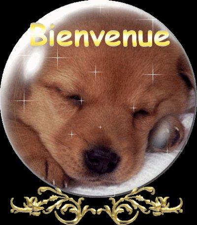 bienvenue sur le blog des chiens